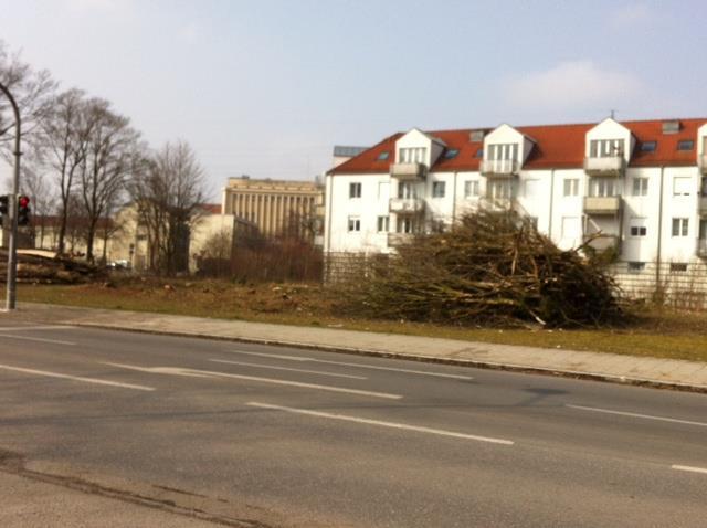 Gefällte Bäume in Ortsmitte